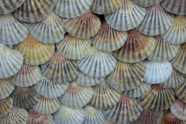 propiedades marisco gallego